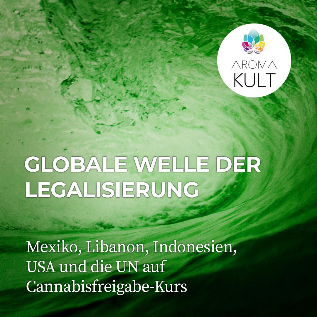 Globale Rückkehr von Cannabis