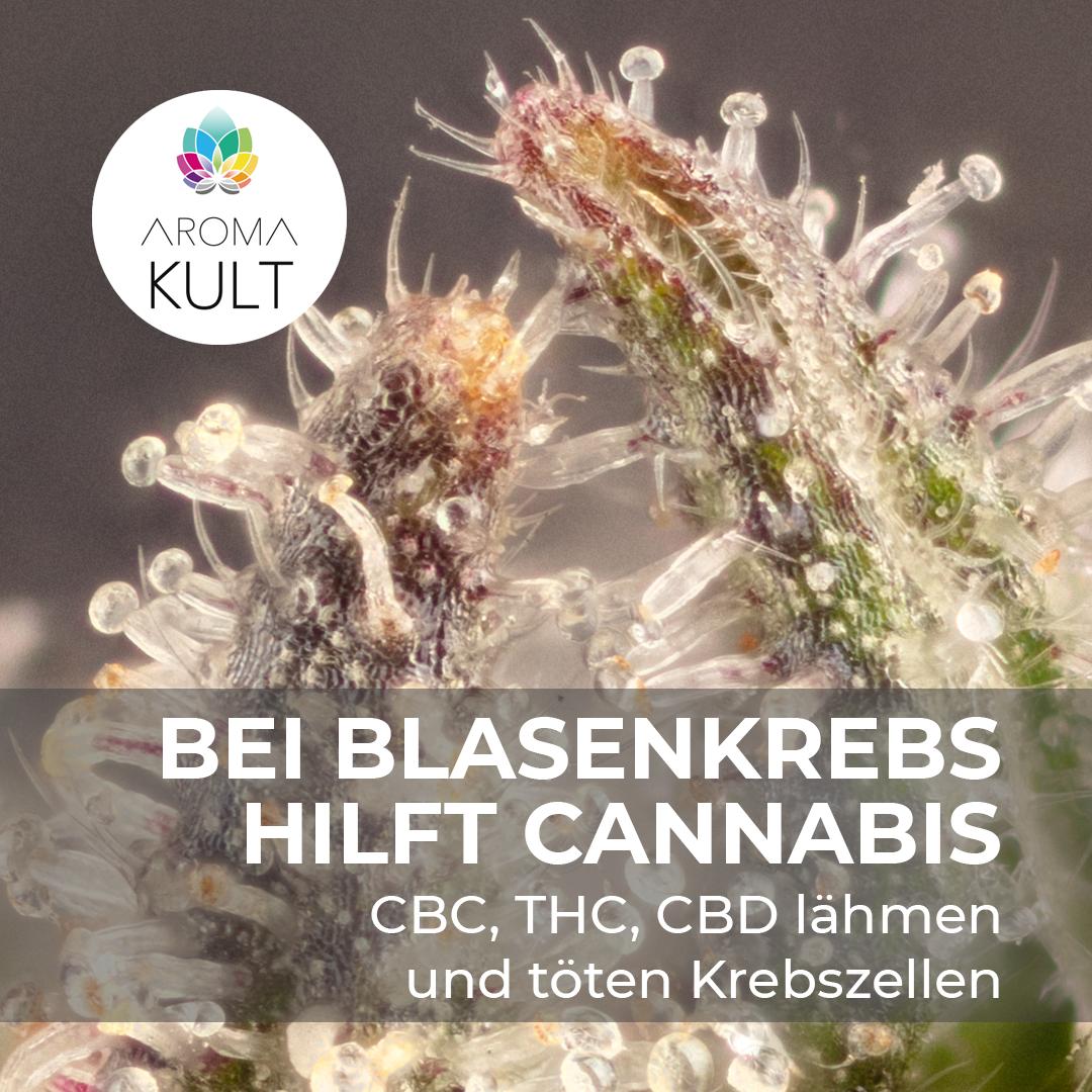 Cannabis hemmt Metastasierung und tötet Karzinom-Zellen