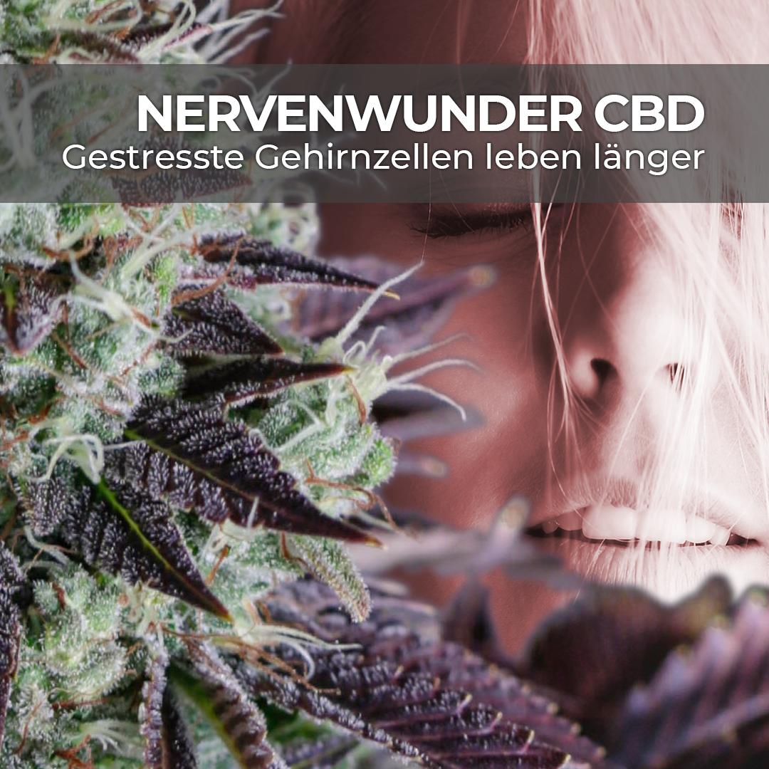 CBD verhindert im Laborversuch Nervenzell-Schäden